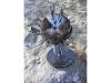 porcupinefish2