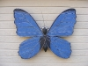 bluemorphobutterfly