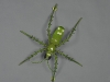 green-insect-low-res