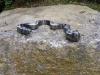 pygmyrattlesnake